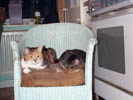 cats on chair 5.jpg